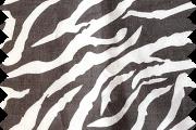 Gray Zebra